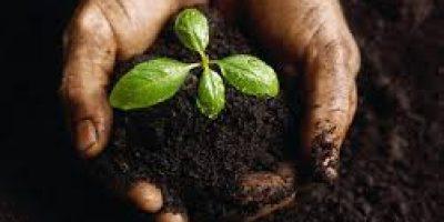 new here seedling